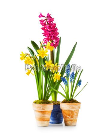 spring, flowers, in, flowerpots - 14045629