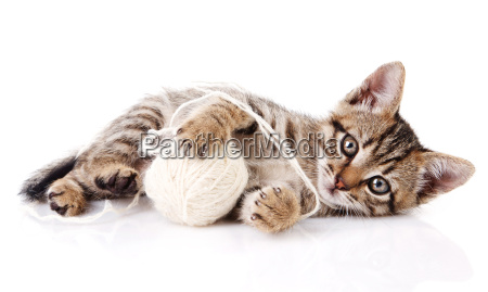 playful kitten with white ball