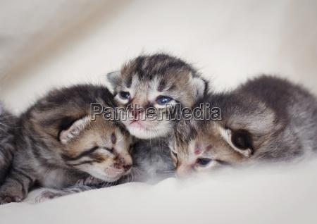 newborn group of small kittens