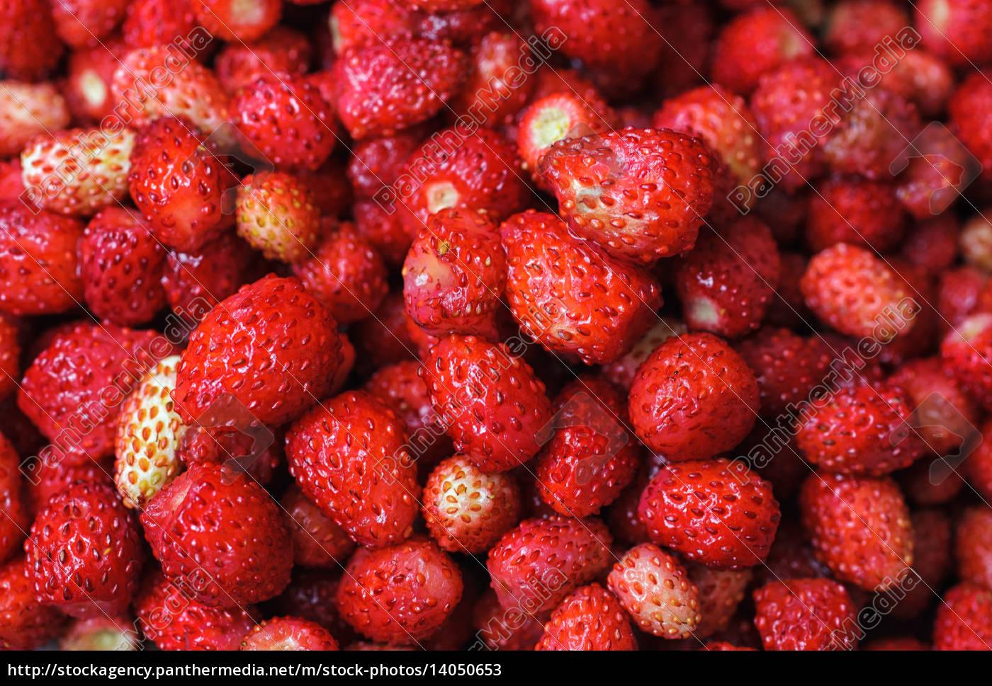wild, strawberries - 14050653