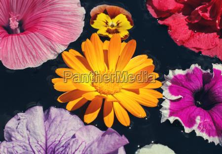 yellow, daisy, flower - 14050679