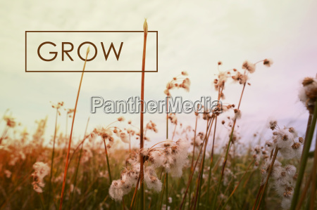 grow concept quote wildflower background