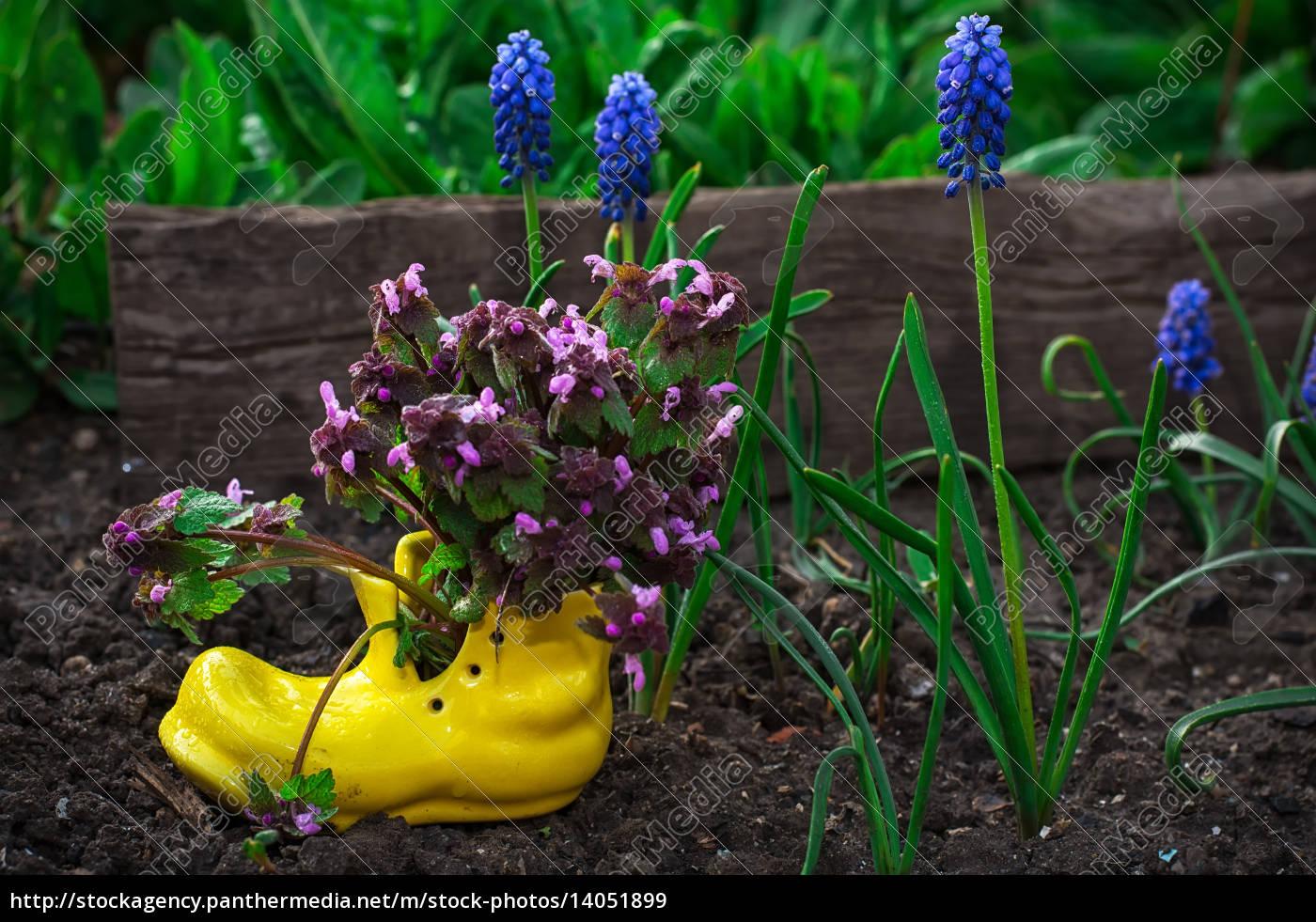 care, of, ornamental, flowers, in, pots - 14051899