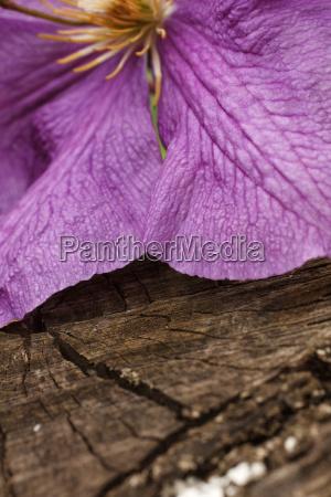 purple, flower - 14052065