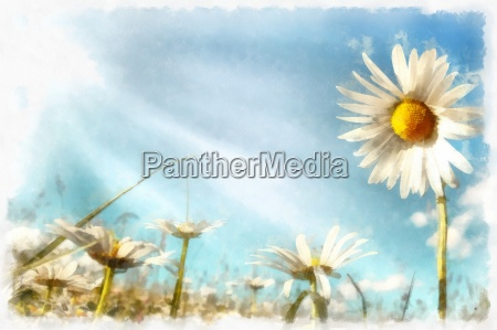 spring daisy flower field vintage