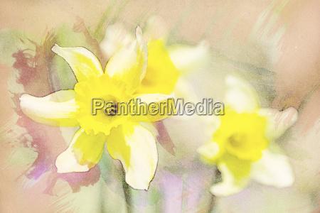 spring daffodils in garden vintage watercolor