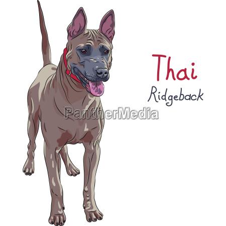 vector red thai ridgeback dog breed
