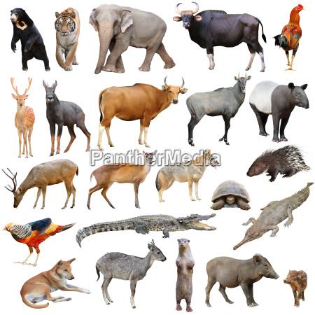 asia animals isolated