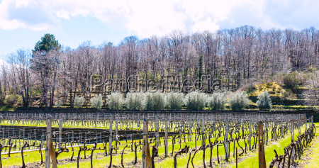 empty, vineyard, in, etna, winemaking, area - 14059385