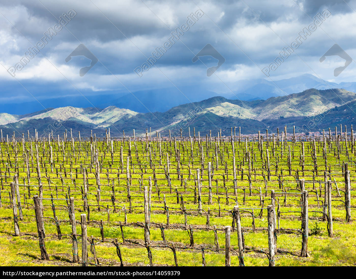 empty, vineyard, in, etna, winemaking, region - 14059379