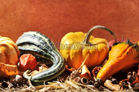 pumpkins - 14059019