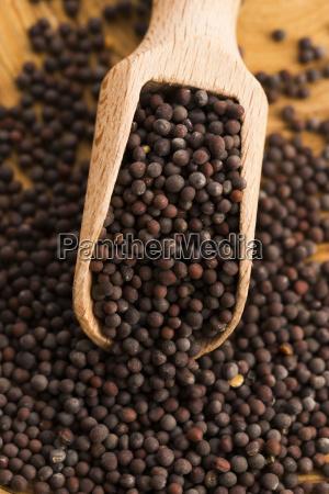 brown, mustard, seeds - 14060119
