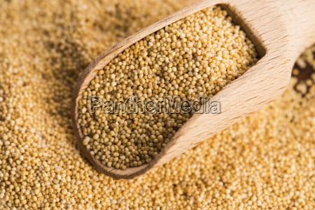 white, poppy, seeds - 14060143