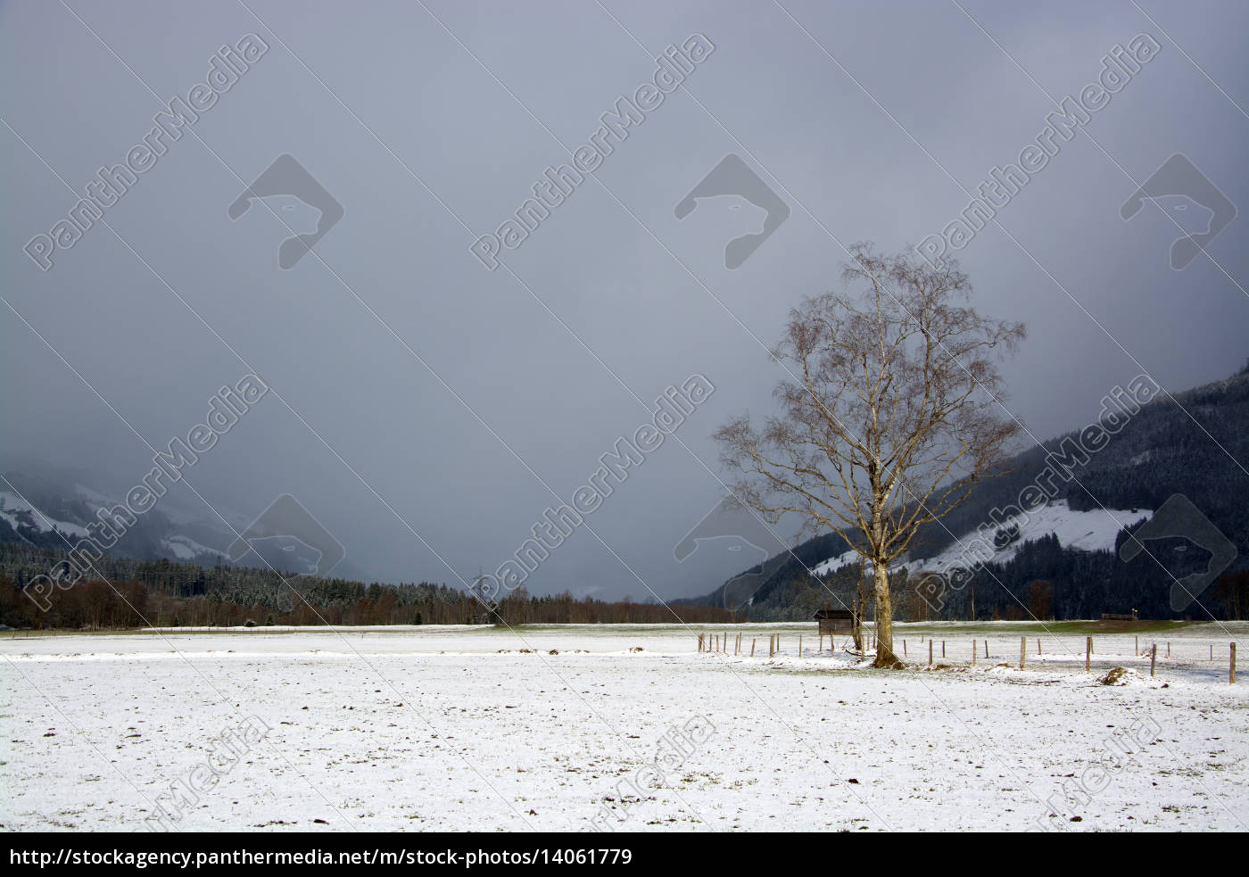 pinzgau, austria - 14061779