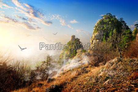 birds over cliffs