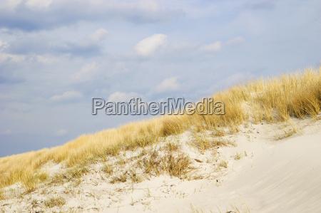 golden, dune, grass, on, the, baltic - 14062219