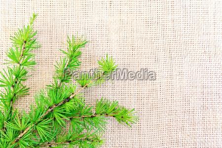 fir, on, sacking - 14063893