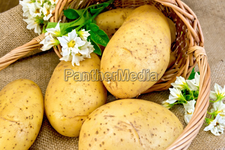 potato, yellow, with, basket, and, flower - 14063955