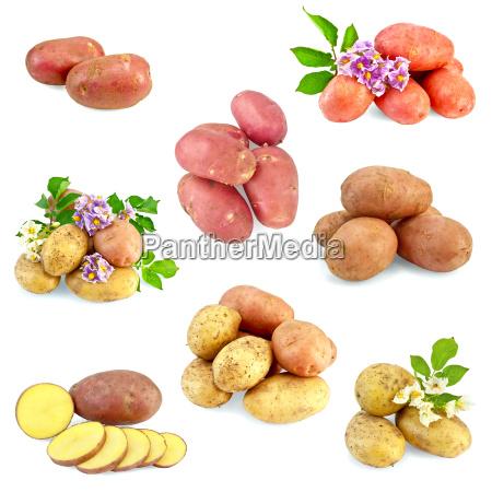 potatoes, different, set - 14063931