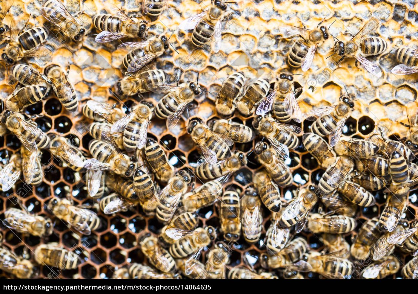 macro, shot, of, bees, swarming, on - 14064635