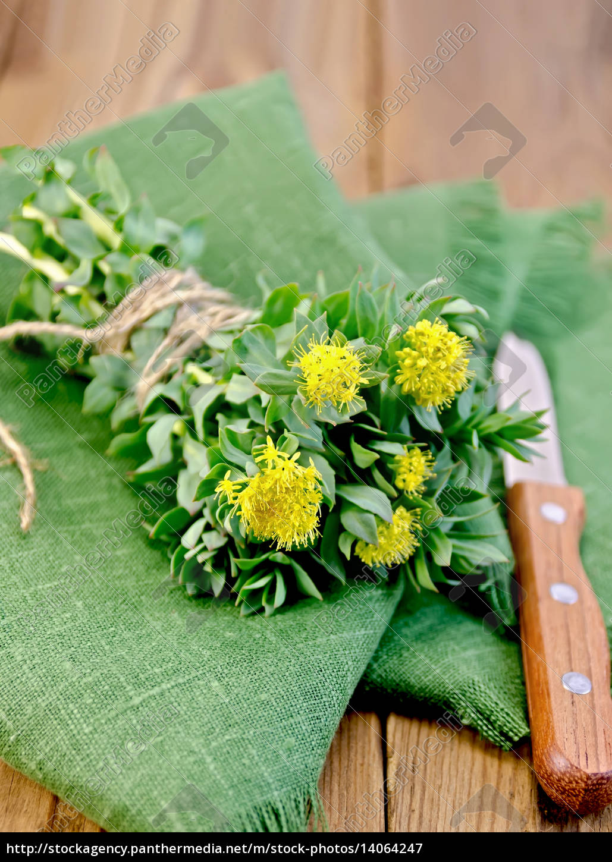 rhodiola, rosea, on, the, green, napkin - 14064247