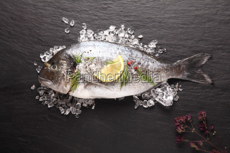 fresh, sea, bream, cooling, on, crushed - 14068053