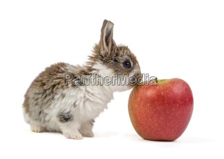 bunnies, /, easter, bunny - 14070259