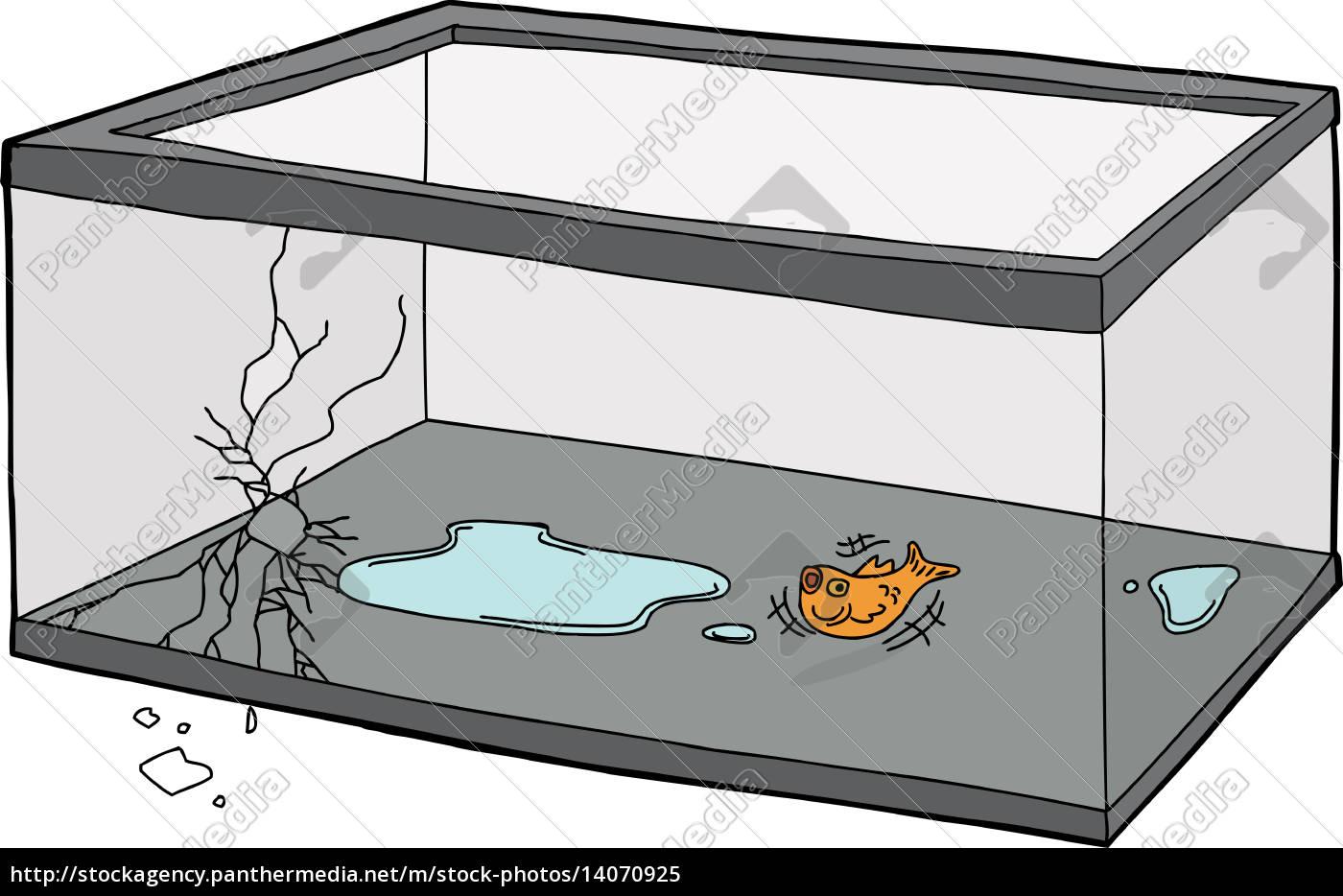 goldfish, flopping, in, empty, tank - 14070925