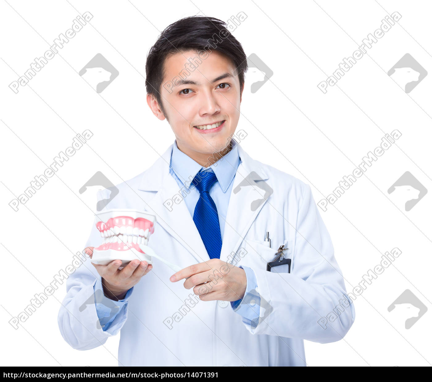 asian, dentist, hold, with, denture, and - 14071391