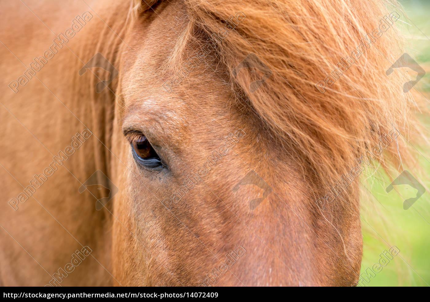 horse - 14072409