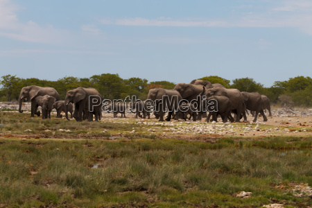 herd, of, elephants - 14075977