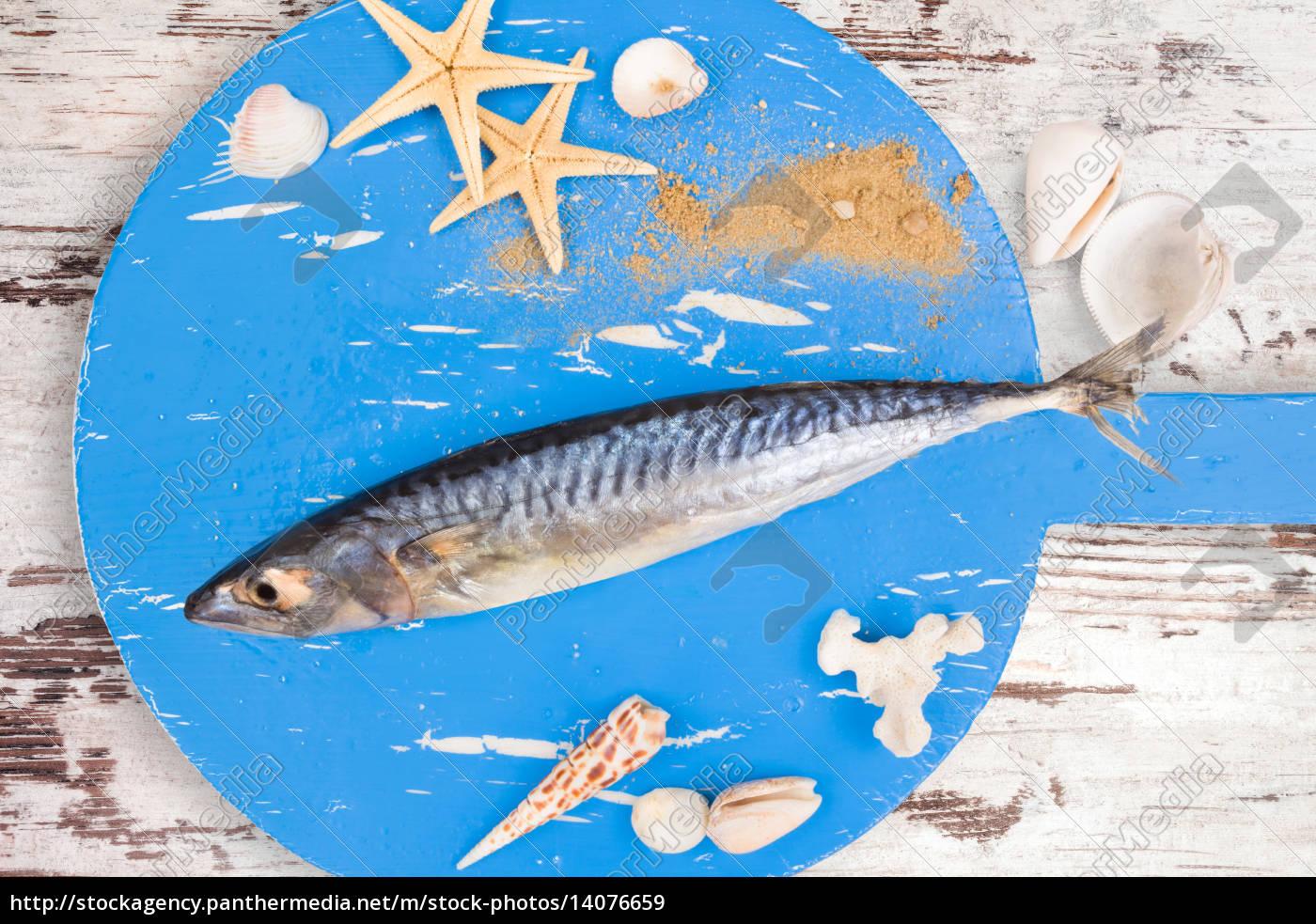 food, aliment, animal, shell, water, mediterranean - 14076659