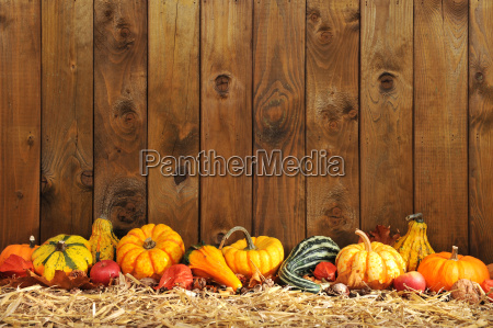 pumpkin, borde - 14078539
