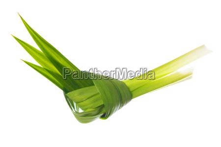 pandan, leaves - 14079165