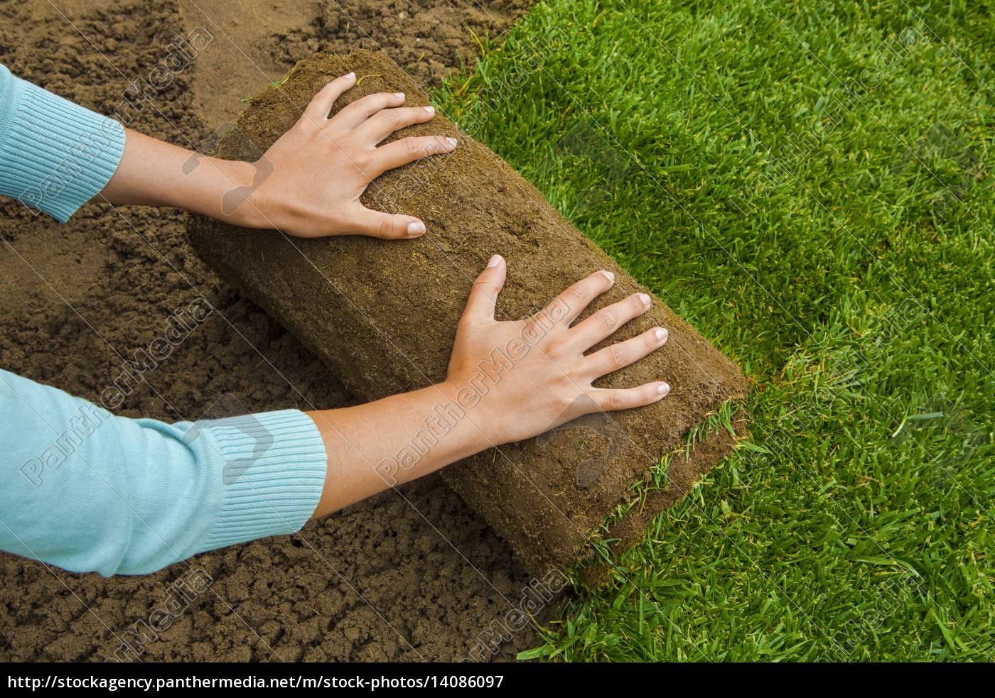 lawned, garden - 14086097