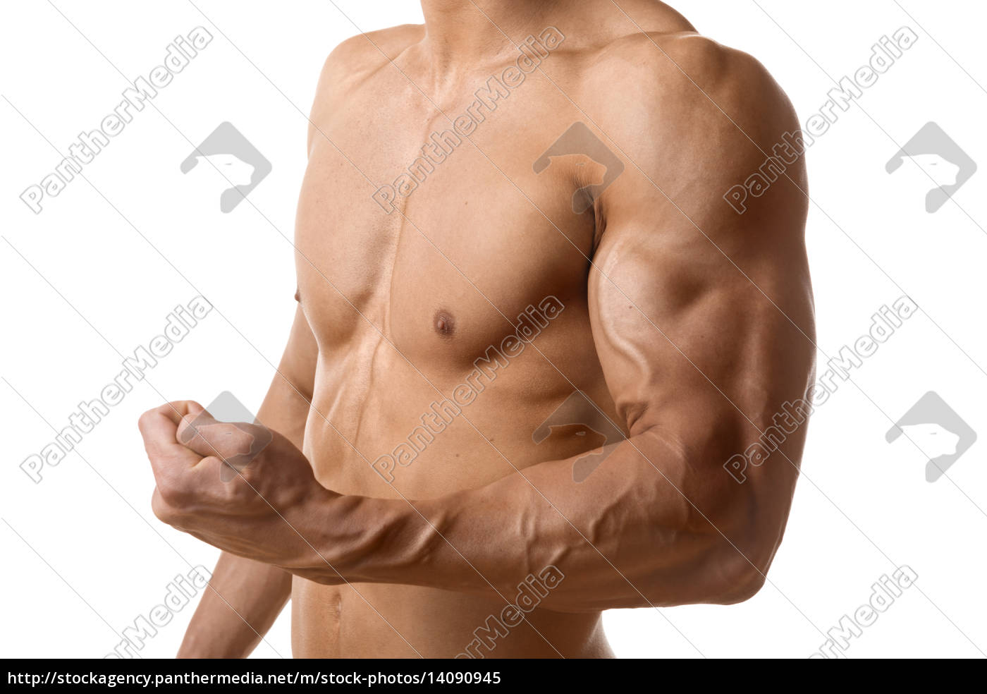 biceps, muscle, of, young, man - 14090945