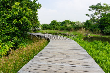 wooden, bridge, in, tropical, rain, forest - 14093763