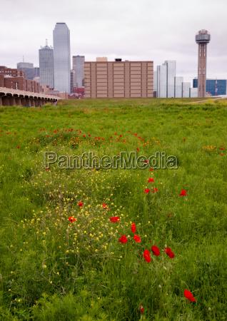 dallas, texas, city, skyline, metro, downtown - 14098905