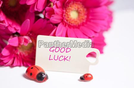 good, luck - 14098327
