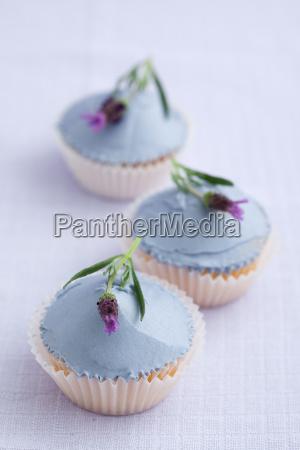 lavender, cupcakes - 14101521