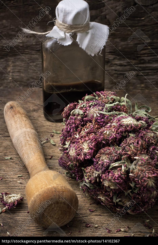medicinal, herb - 14102367