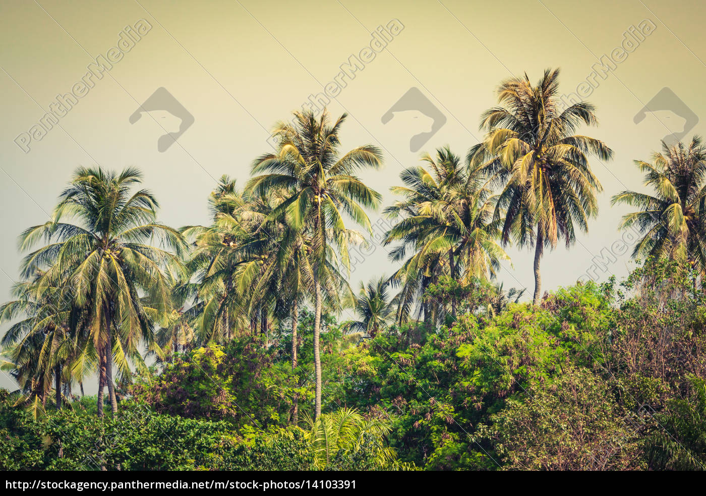 travel, vacation, background, -, tropical, island - 14103391