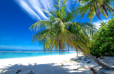 secluded beach with palm trees