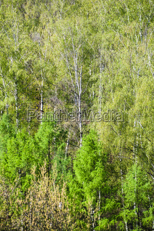 above view of green crones of
