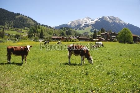 early summer in gstaad
