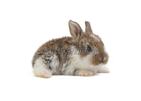 bunnies easter bunny