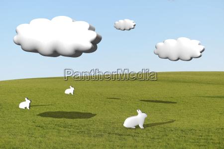 three white rabbits on grass under