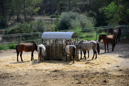 horses on the paddock spain