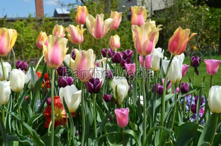 jardim flor flores planta tulipas jardineiro