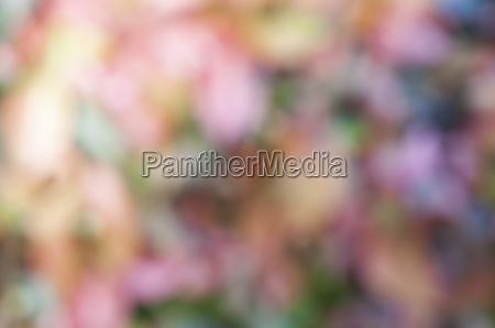 blurred, background - 14211689